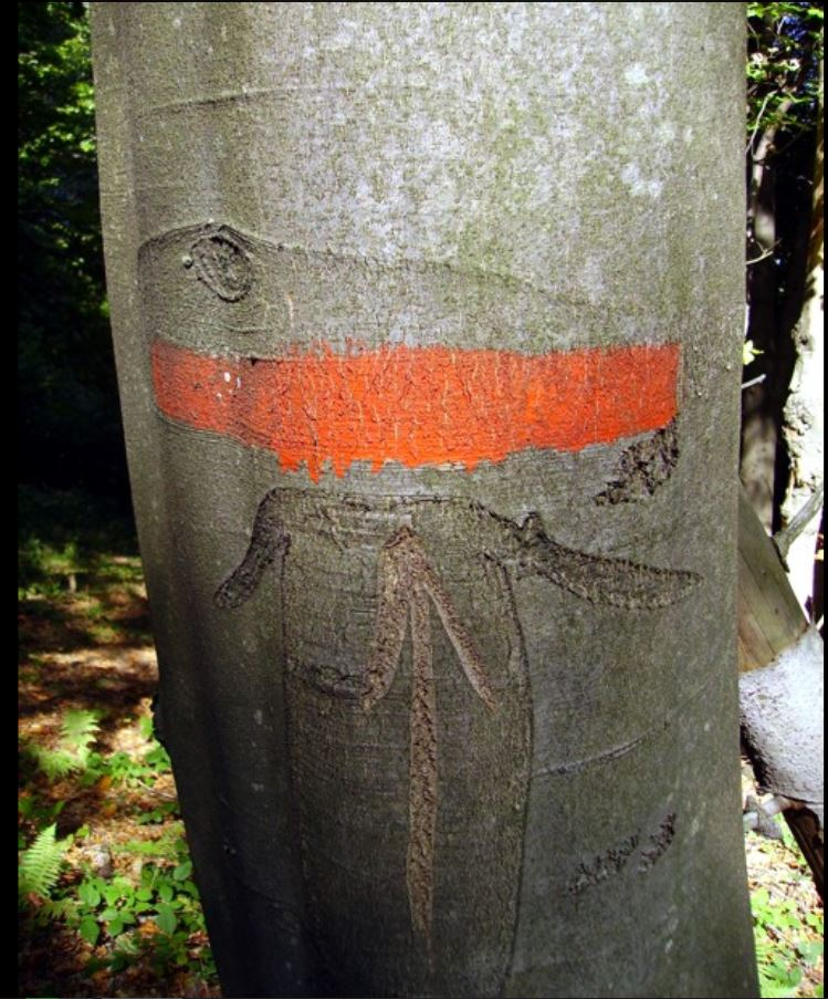 Ochranný les - značenie v teréne