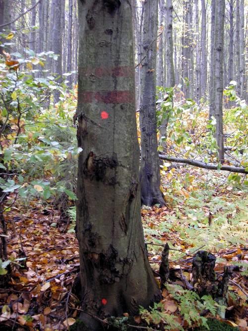 Príklad-nelegálneho-výrubu-stromu-hranica-rezervácie