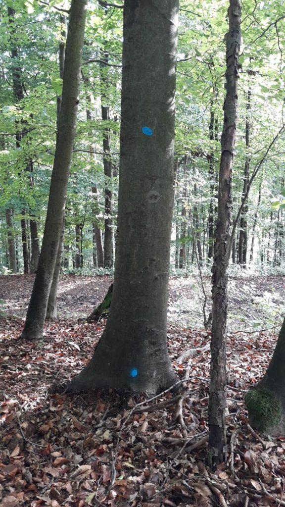 Strom určený na výrub - modré bodky