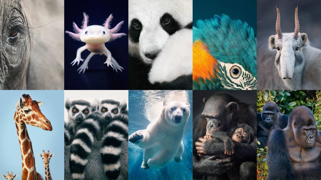 Najviac ohrozené živočíchy